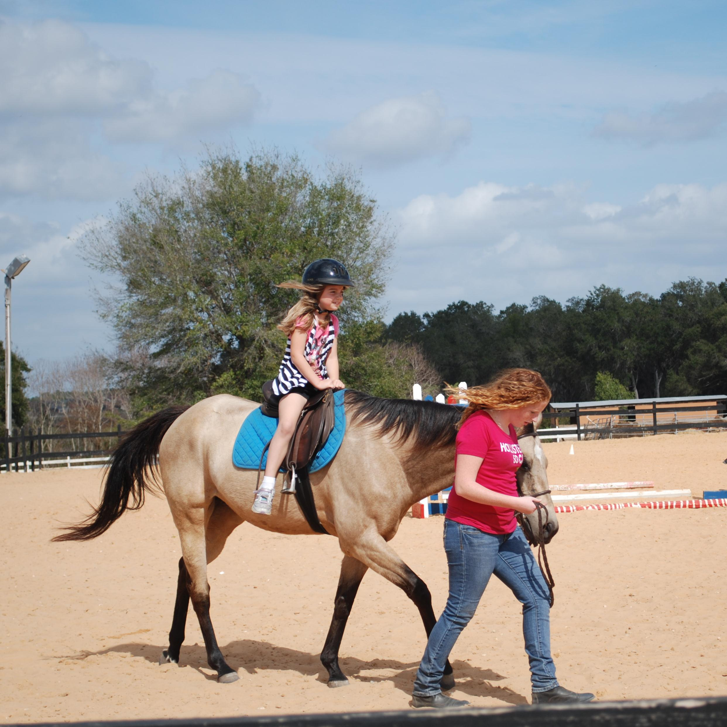 Pony Rides / Grooming Sessions