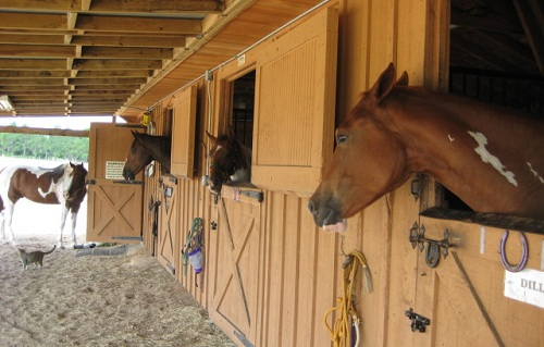 Horse adoptions in central florida for Horse farm
