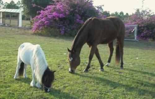 Dream Catchers Equine Rescue wwwdreamcatcherhorseswpcontentuploads40 26
