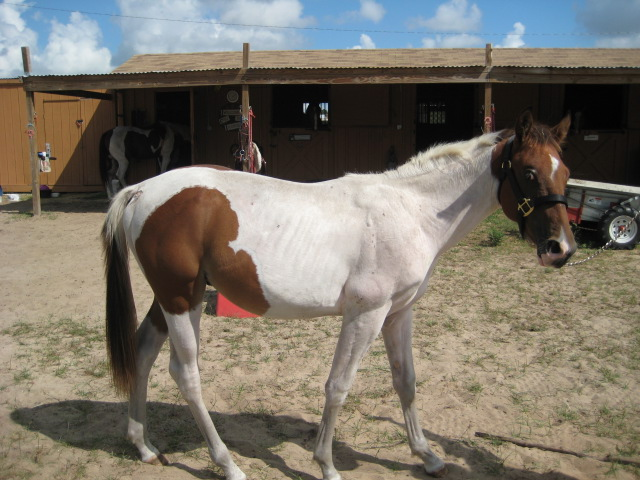 Horse Rehabilitation Services